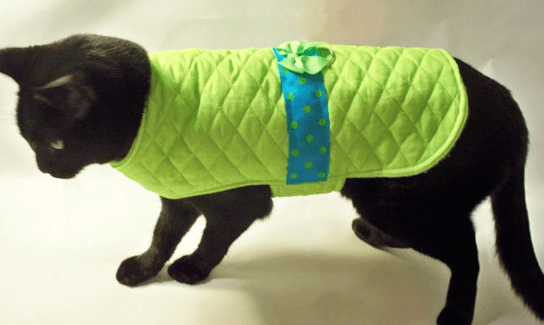 Попоны для кошек после стерилизации